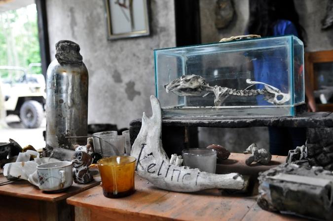 Rabbit's Skeleton